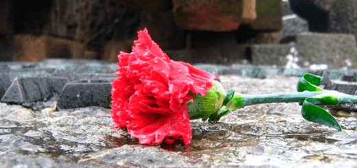 Amor contra el terror y la Violencia